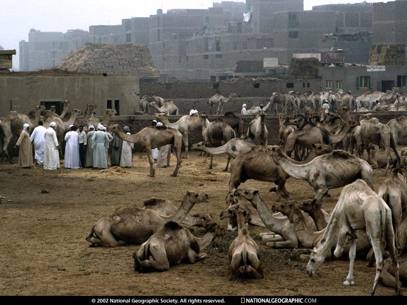 سوق الجمال بامبابة عام 1990.